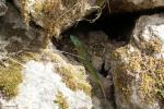Cascades de runes 11
