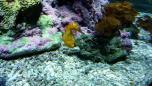 La cite de la mer 7