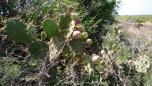 St anne savane des petrifications 4